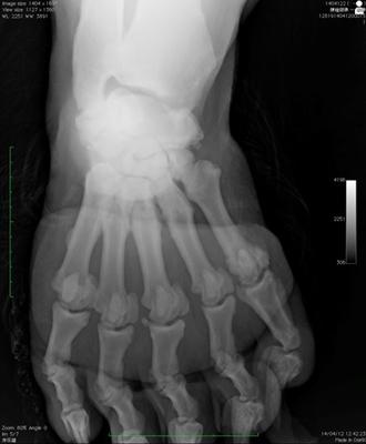 ヒグマのレントゲン写真