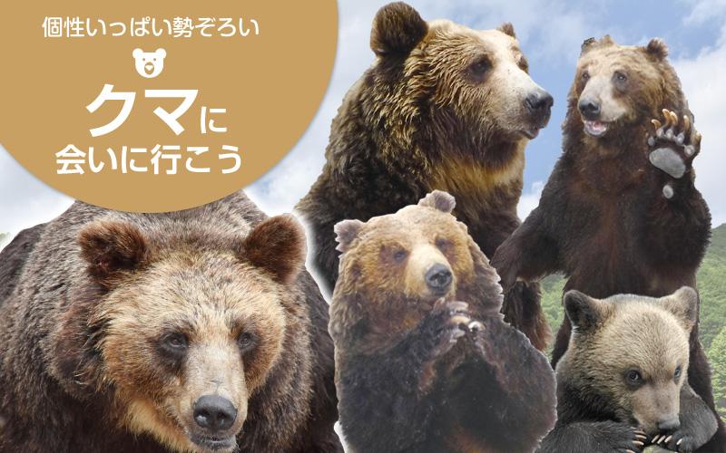 クマに会いに行こう