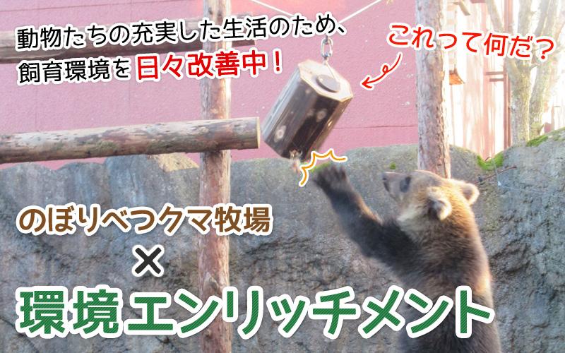 クマ牧場×環境エンリッチメント