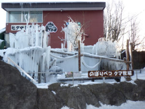 こぐま牧場が凍りました。