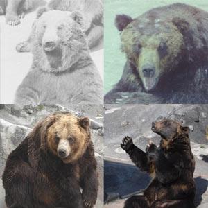 クマについて学べるレクチャーヒグマクイズ、HPにて毎月更新!
